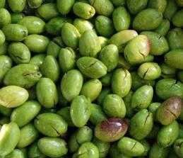 [:en]Green cracked olives[:el]Πράσινες ελιές τσακιστές